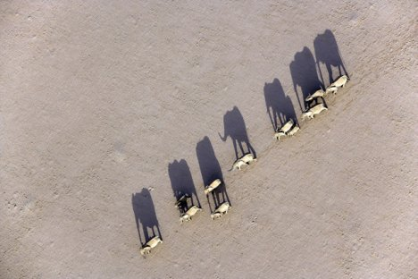 Marching Desert Elephants, Damaraland, Namibia
