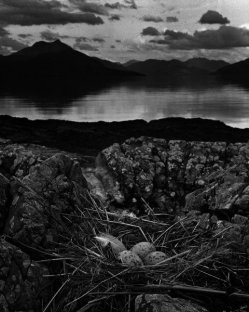Gull's Nest, Midsummer Eve Isle of  Skye
