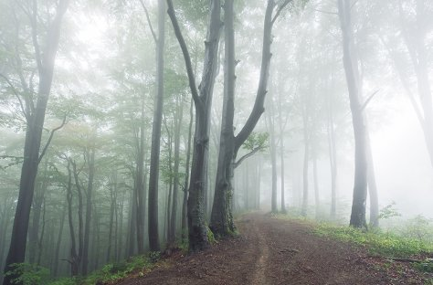 Forest in mist, Carpathians, Ukraine