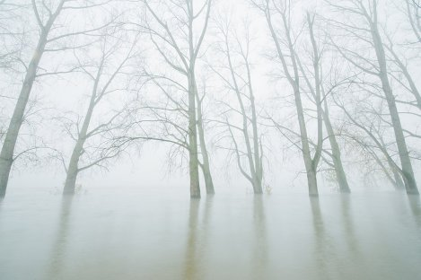 Trees on Rhine in mist